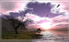 黎明 dawn