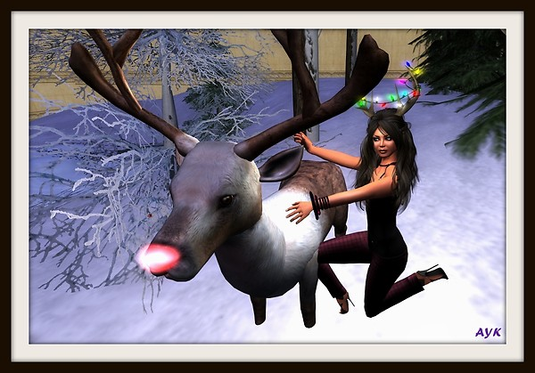 I tamed a reindeer