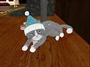 What Teacup Cat?