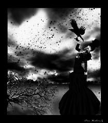 Raven (1449 x 1656)