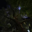 Selkirk big tree nightime