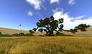 Noweeta Grassland1