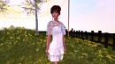 Daisy flower garden 2