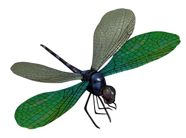 Blue Dragonfly 3D Model