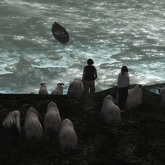 Sheep X Sheep