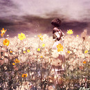 The garden of daisies