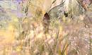 libra garden