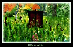 lost in cattails
