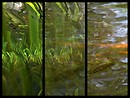 Water Reflections Triptych
