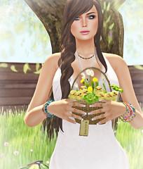 SpringChicks2