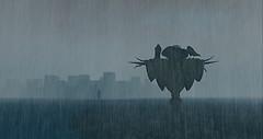 2304 Rain (2)