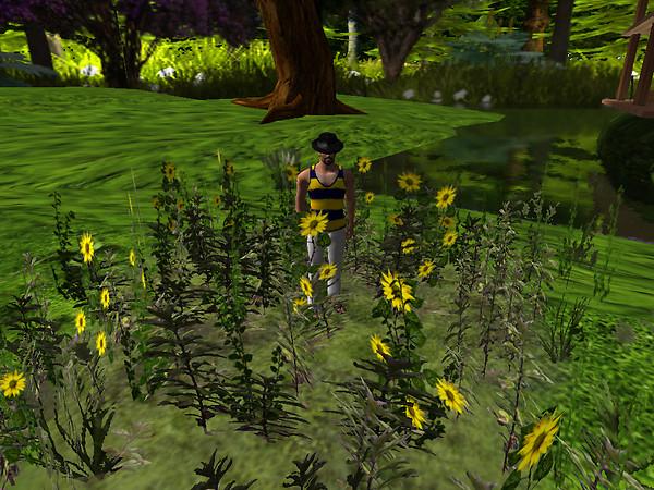 Relaxing in new flowers, Devis Garden (3)