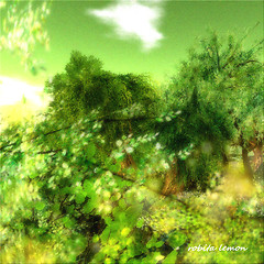 The season of green leaves