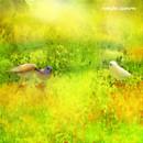 Birds Talk