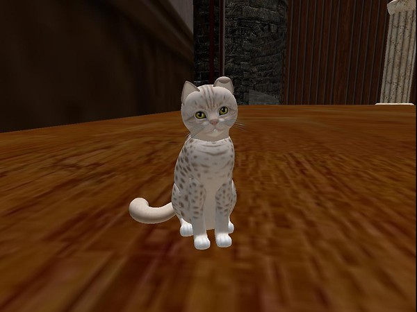 Virtual cat:  Ocicat lavender.  Sit.