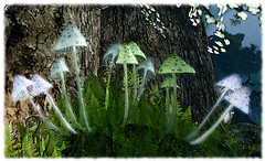Mushroom Song by Hilda Conkling
