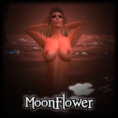moonflower test 2