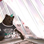 SL10B Bear Avatar