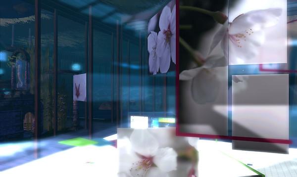 SL10B Sakura Photo Gallery - 2
