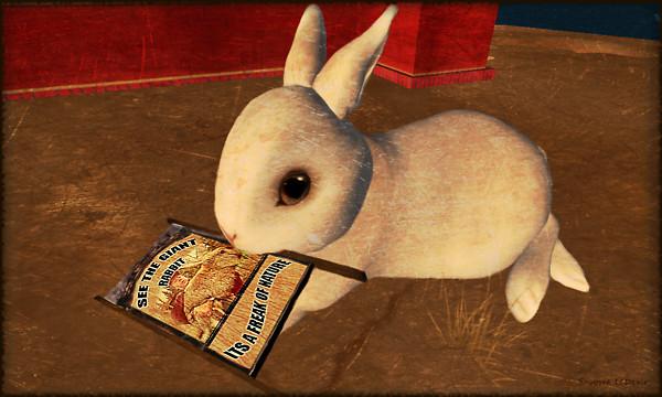 Side Show Bunny