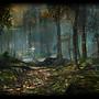 ... dans la forêt profonde ...