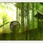 Derrière les bambous