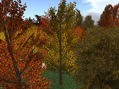 Fall Forest_001