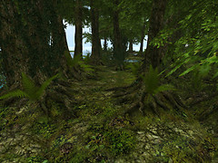 Green Forest_001