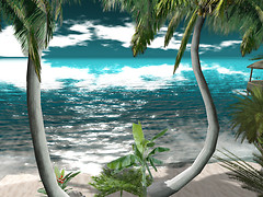 Palm Trees_001