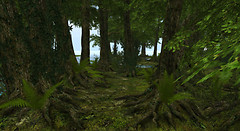 Green Forest_002