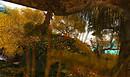 Kittens Heaven Autumn4