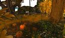 Kittens Heaven Autumn1