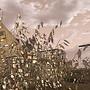 Fallout Wasteland 1