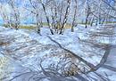 21strom Silver birch roads - Winter landscapes