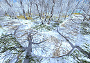 21strom Silver birch roads - Winter landscapes