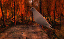 Dove in the Wood