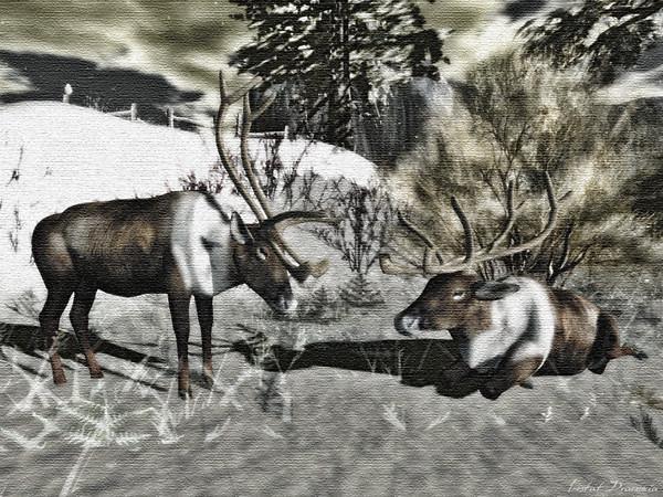 Reindeer on Canvas