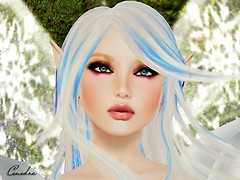 Closeup ~ Snowfairy