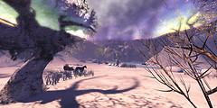 Winter Scene 2013 5