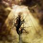 tree of life!!!