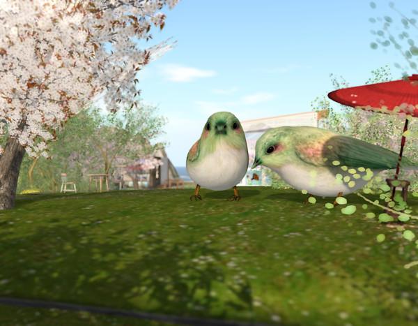birds in toyota garden