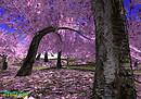 21strom Cherry Blossom Park