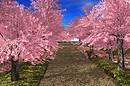 21strom Cherry Tree Park