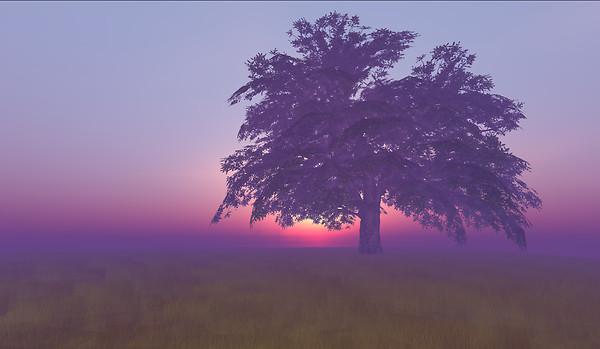 Big Oak 1