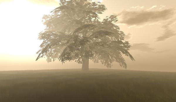 Big Oak 2