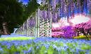 Wisteria, Azalea & Bluebells - Totoro's Forest