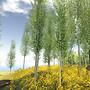 Natural Mignon Spring 2