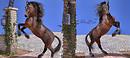 HiveWire 3D Horse Test....