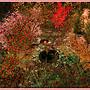 SL11B Garden