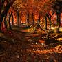 Serene Autumn